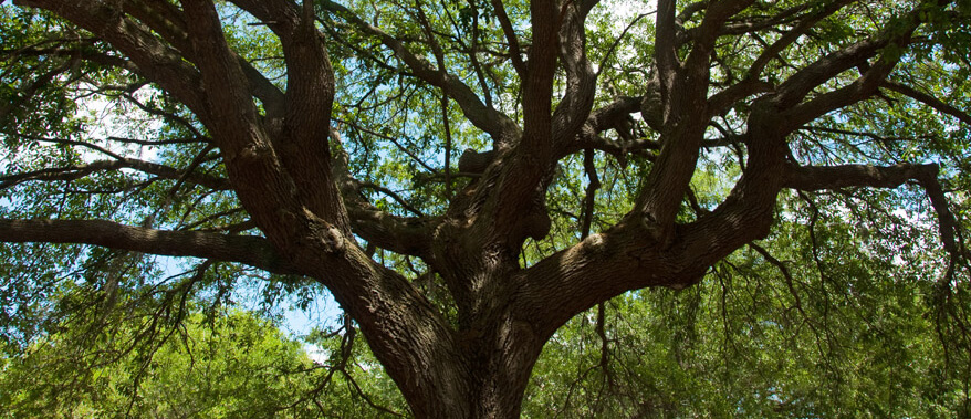 The Devil's Tree and Other Things You Should Know About Port St. Lucie