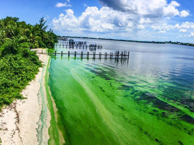 Algae Blooms Port St Lucie Treasure Coast